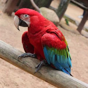 arara-parque-das-aves
