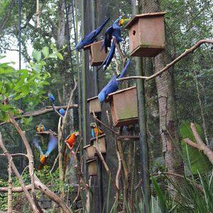 viveiro-das-araras-parque-das-aves