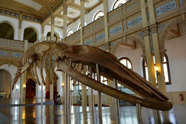 museu historia natural santiago chile