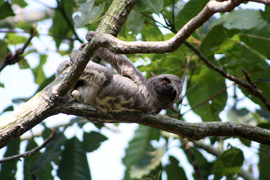 macacos amazonia paraense