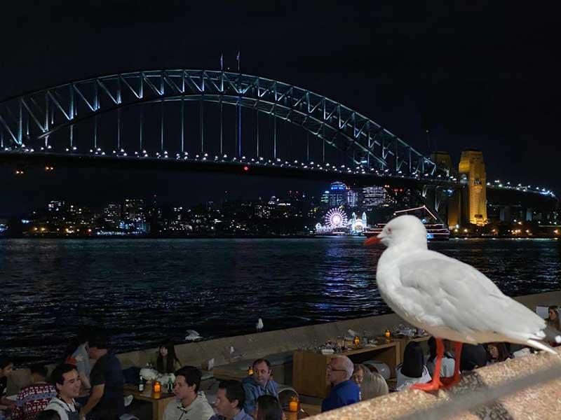 Harbour Bridge vista do Opera Bar