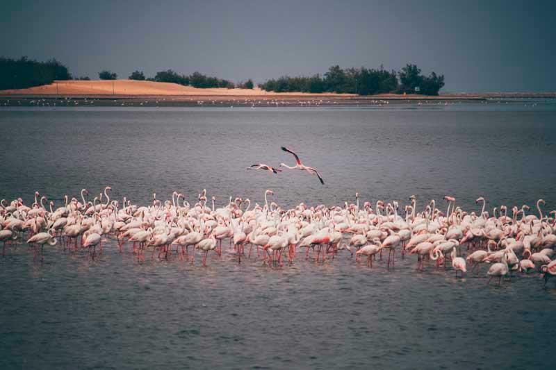 Walvis Bay namíbia