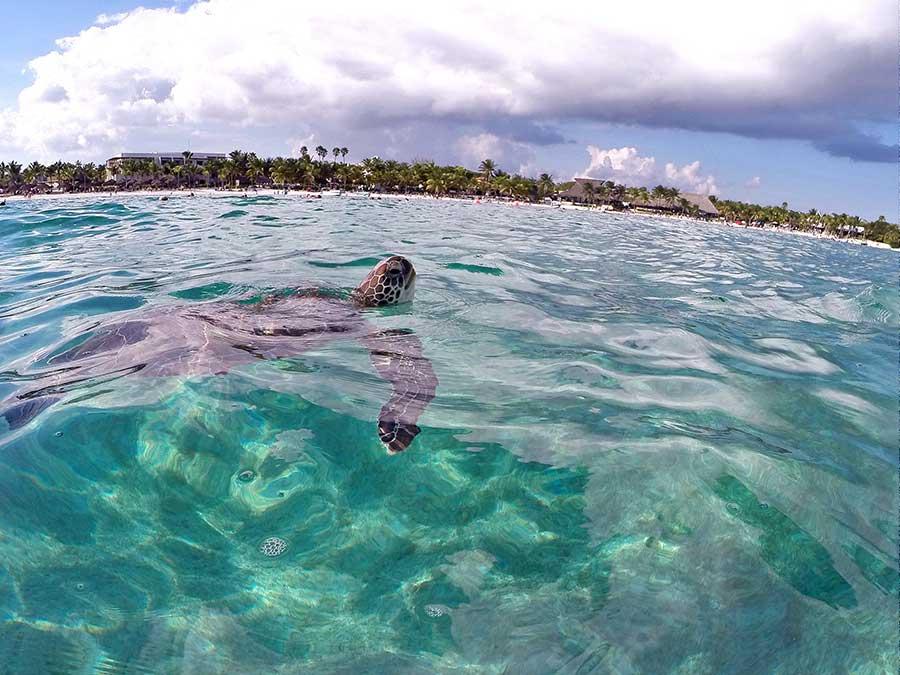 akumal praia tartarugas
