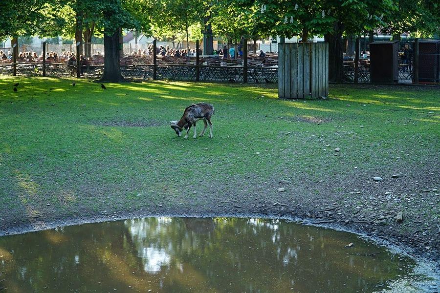 koniglicher hirschgarten