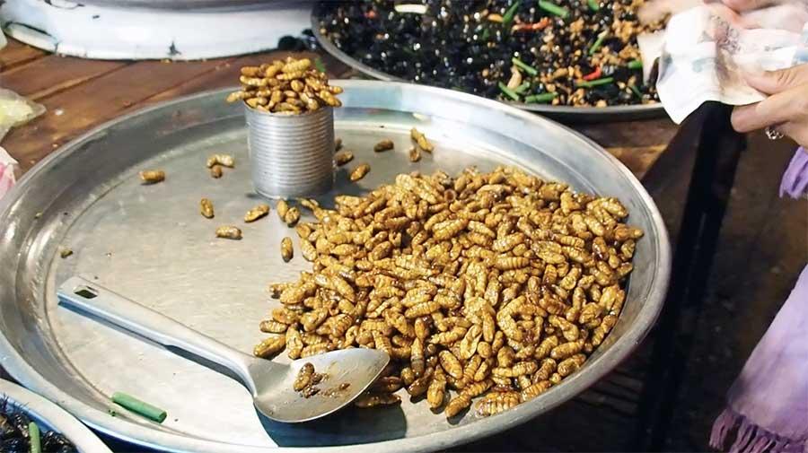 larvas fritas camboja
