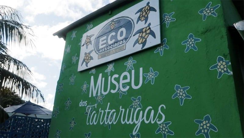 museu das tartarugas