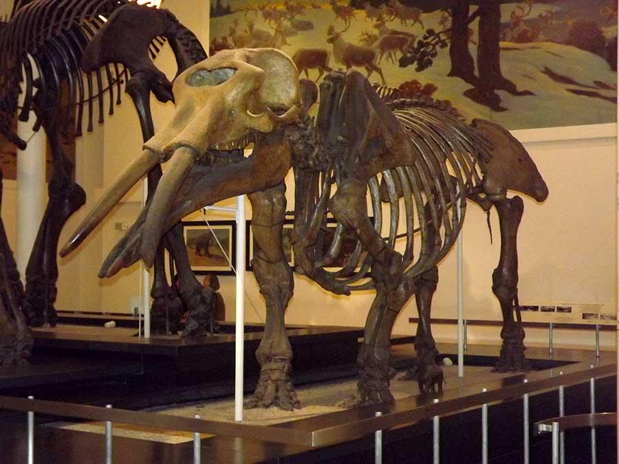 museu historia natural ny