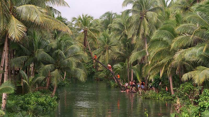 palmtree bang