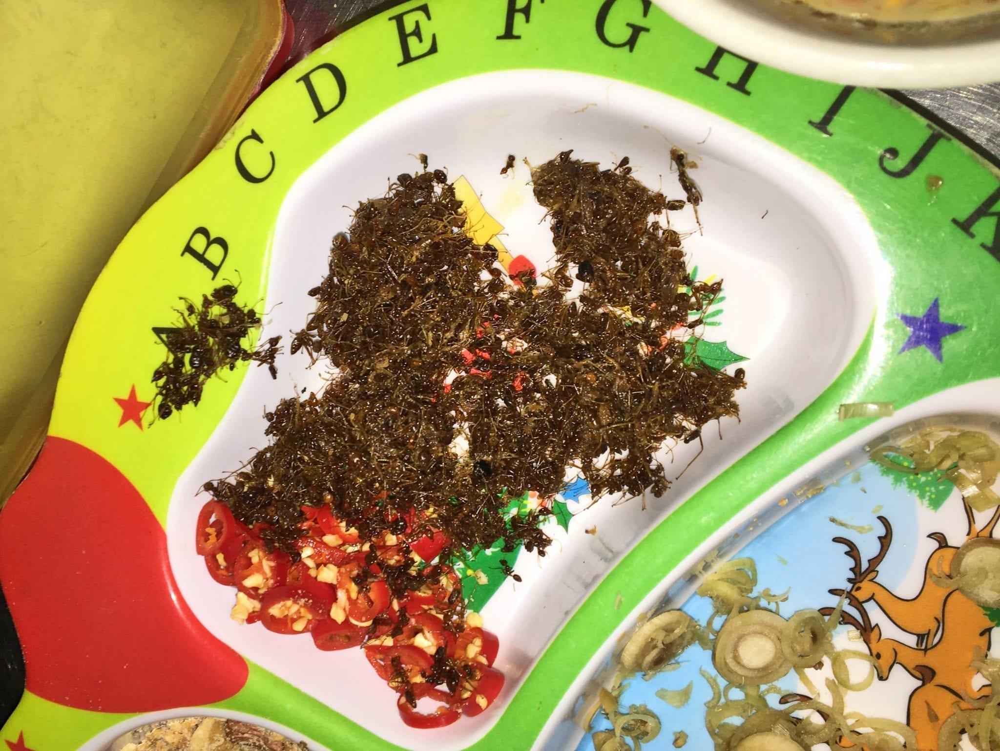 molho de formiga vermelha