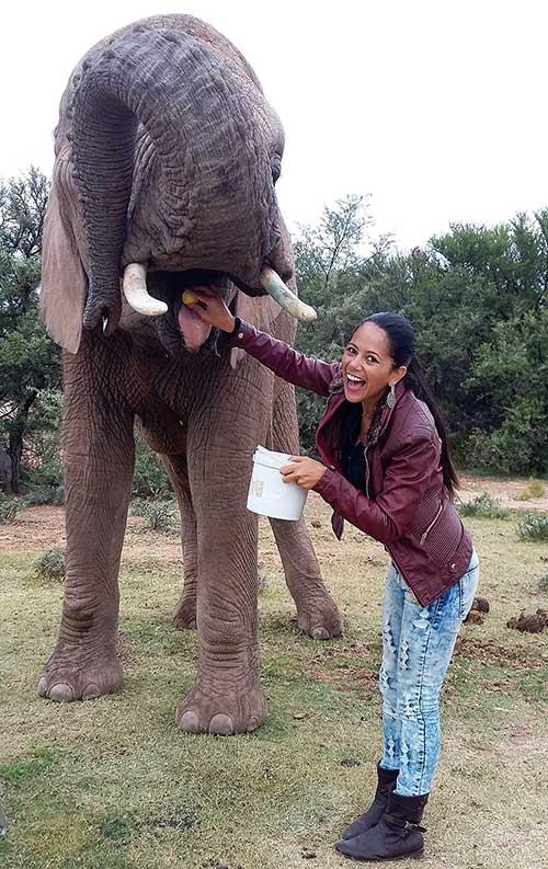 safari elefante africa