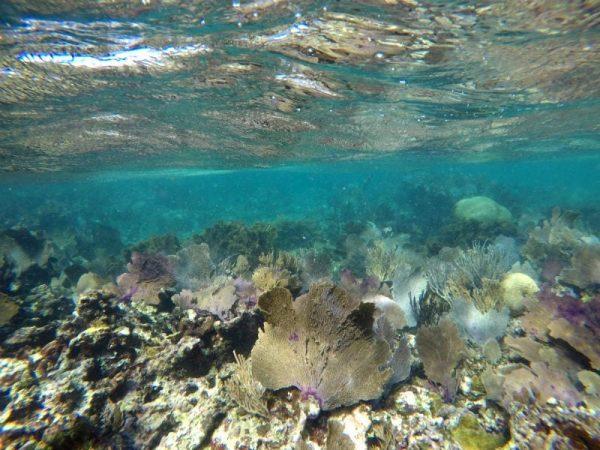 snorkel puerto morelos cancun